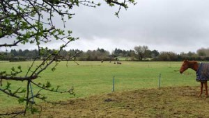 manor road field