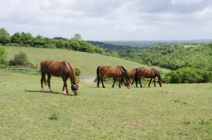 Horses from the visitor centre will be housed at Keynes Farm