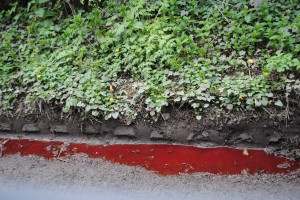 The lane is awash with blood, a grim warning to motorists to take care